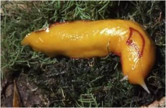 P1 slug