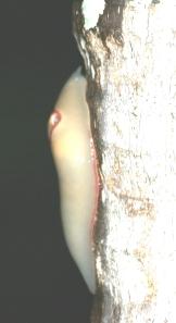 Slug 1