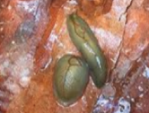 Baby slug