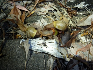 Snails at night