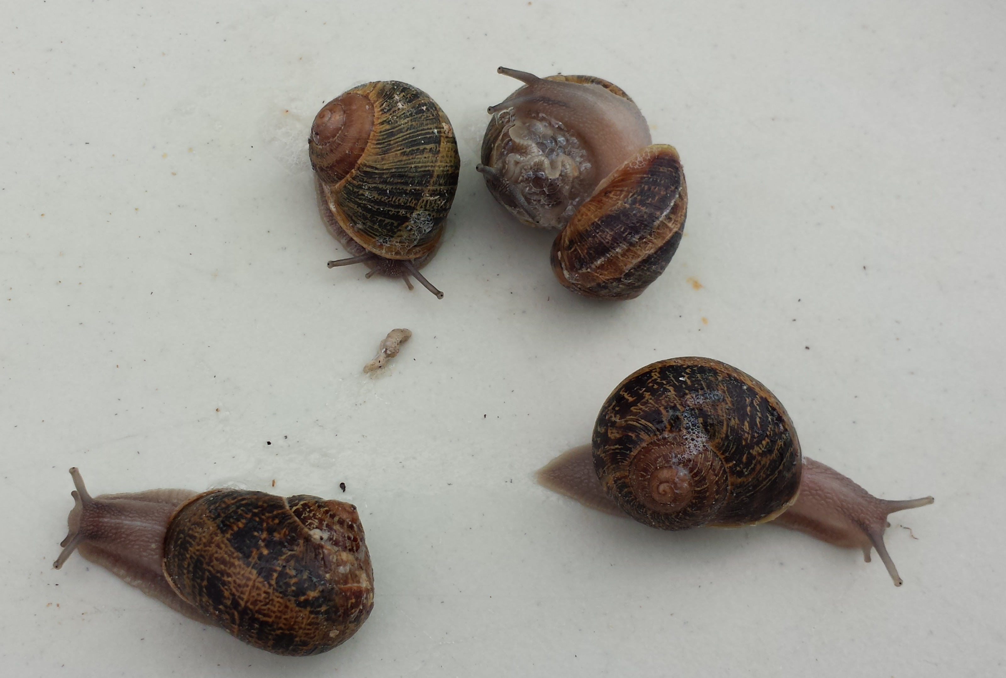 january 2015 facts about snails