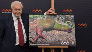 david-attenborough-snail-1