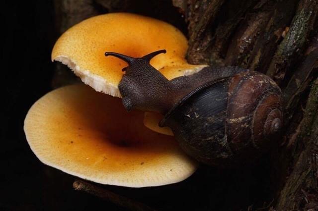 Cosa fanno le lumache mangiando fatti sulle lumache-8741